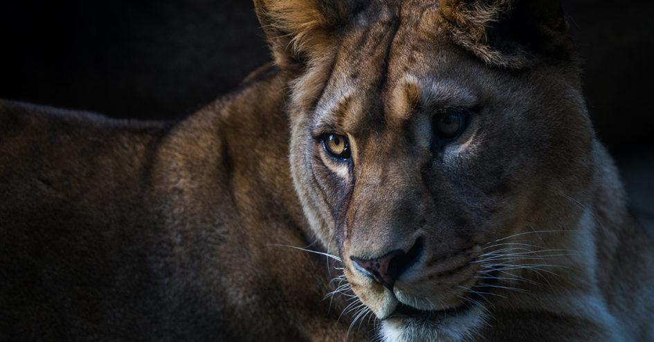 Die Höhle der Löwen Versand
